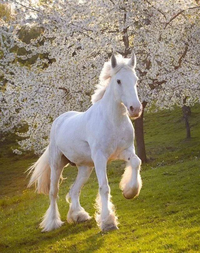 Картинки белого коня