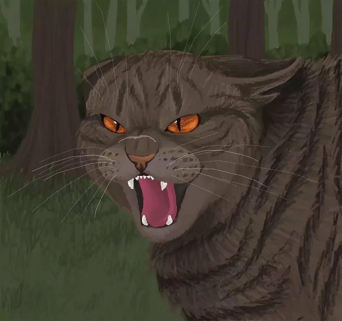 Картинки злого кота воителя, для