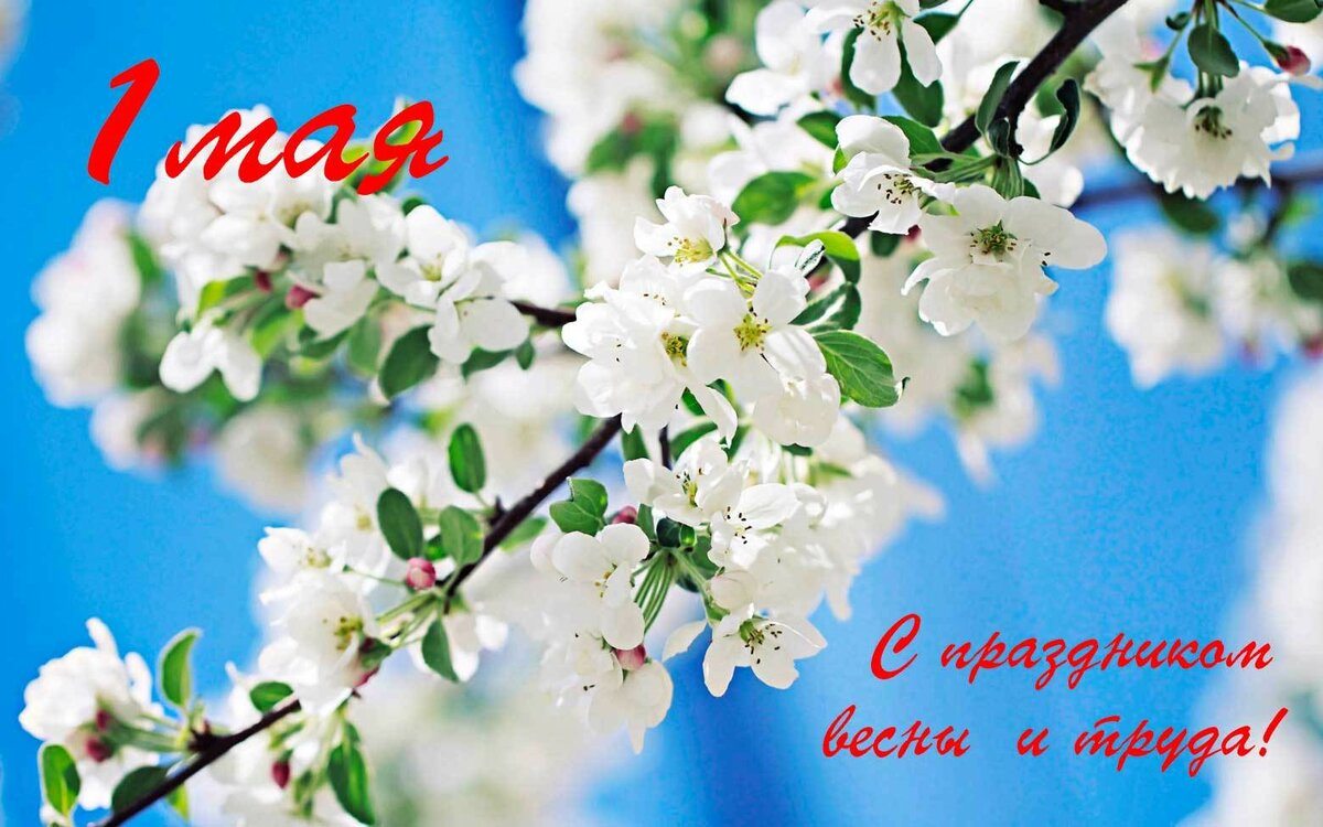 Яблони в цвету открытки