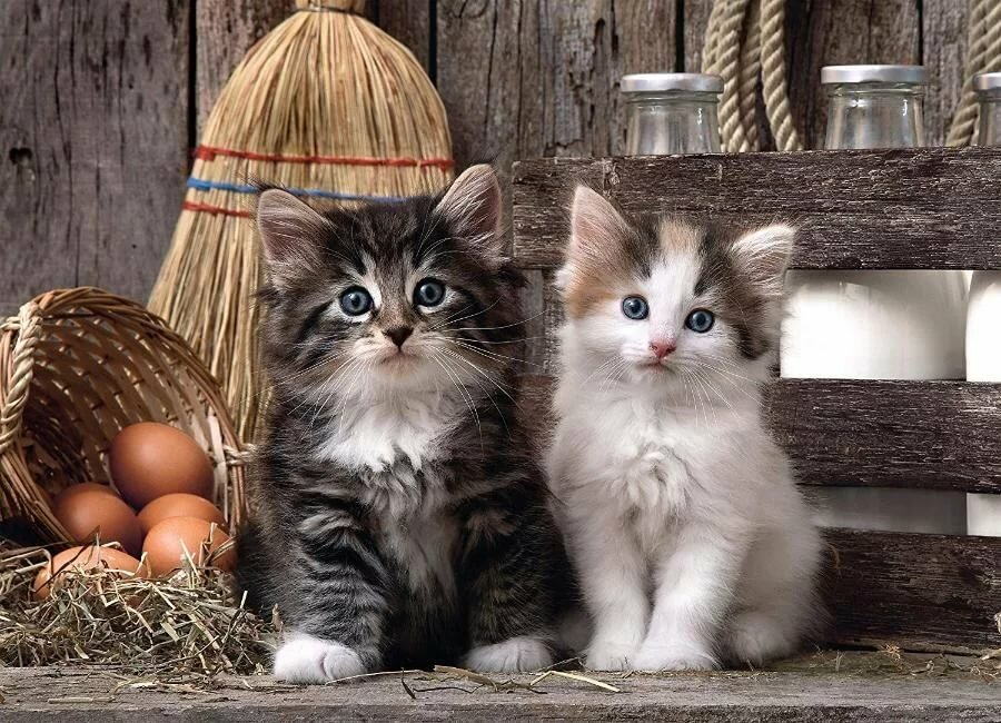 Кошка и котики картинки