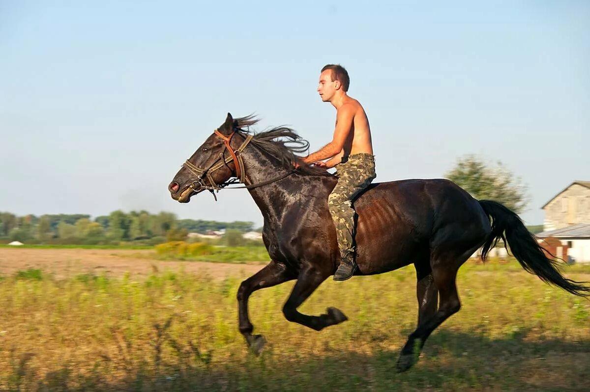 Человек на коне картинка