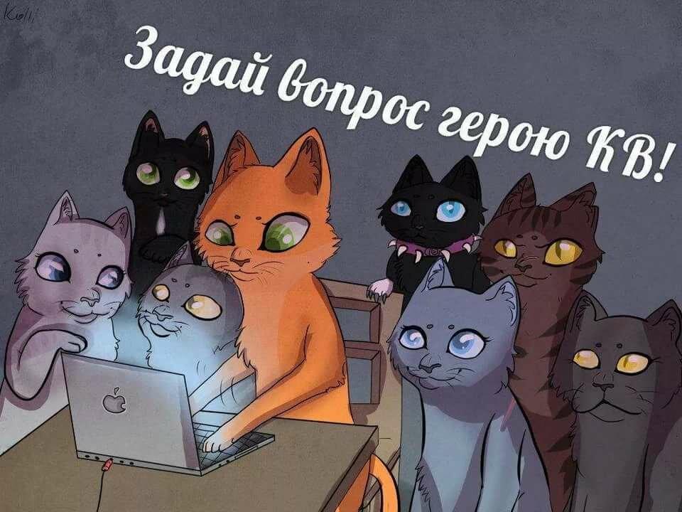 Смешные картинки коты воители с надписями