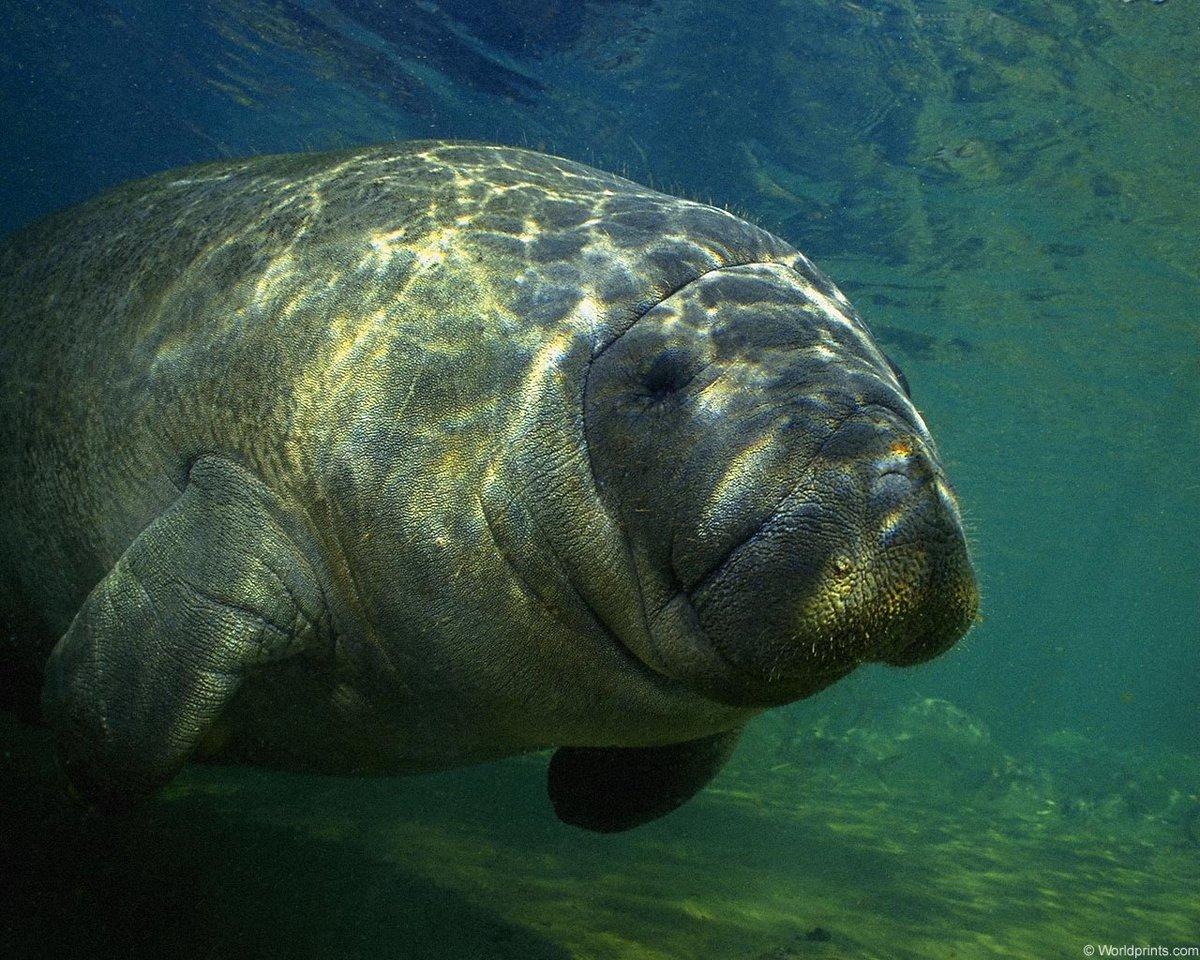большие морские животные картинки с названиями