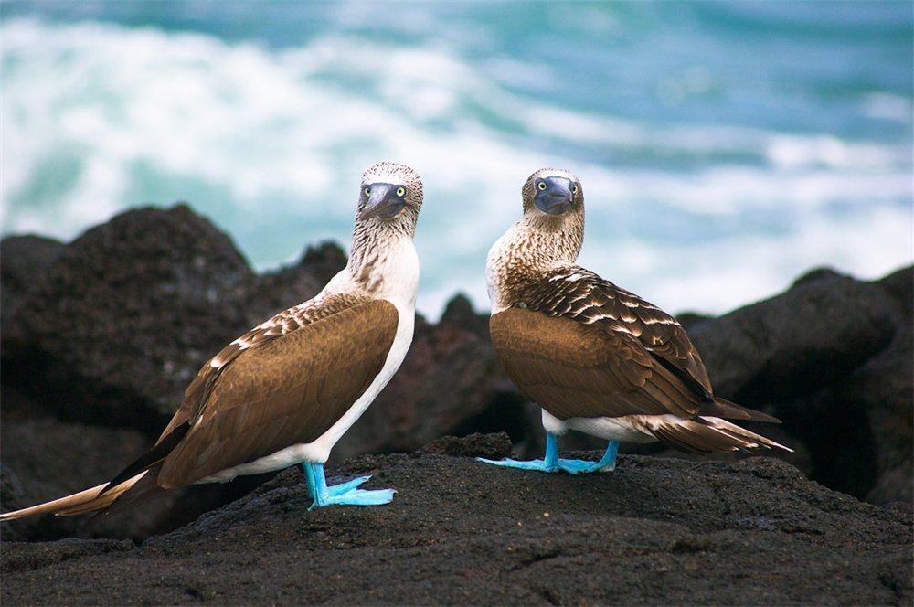 Птицы на Галапагосских островах