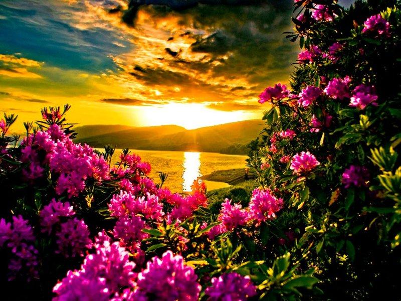 прекрасное лето фото светло