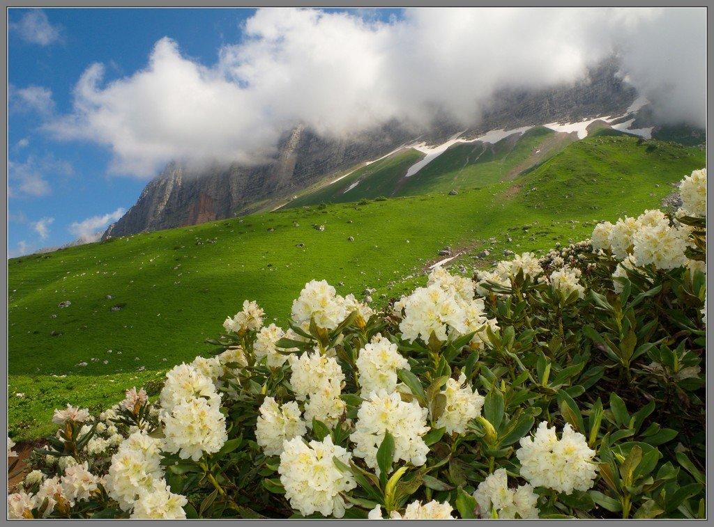 На альпийских лугах Лаго-Наки. Западный Кавказ, урочище Чигурсана