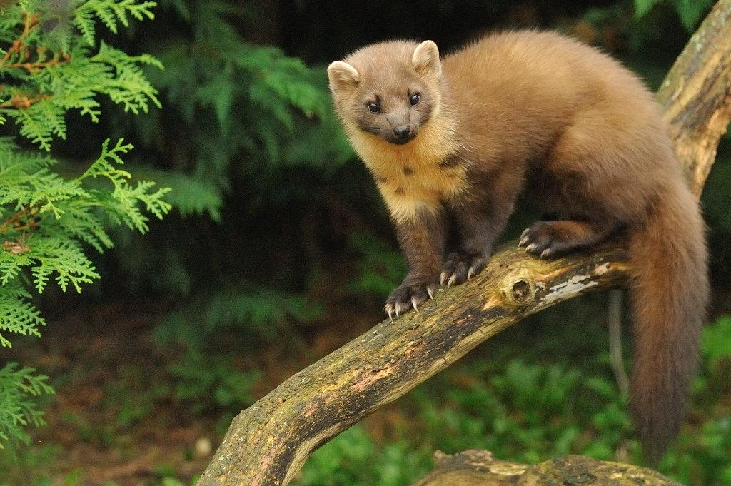 лесные животные фото и названия решили проверить