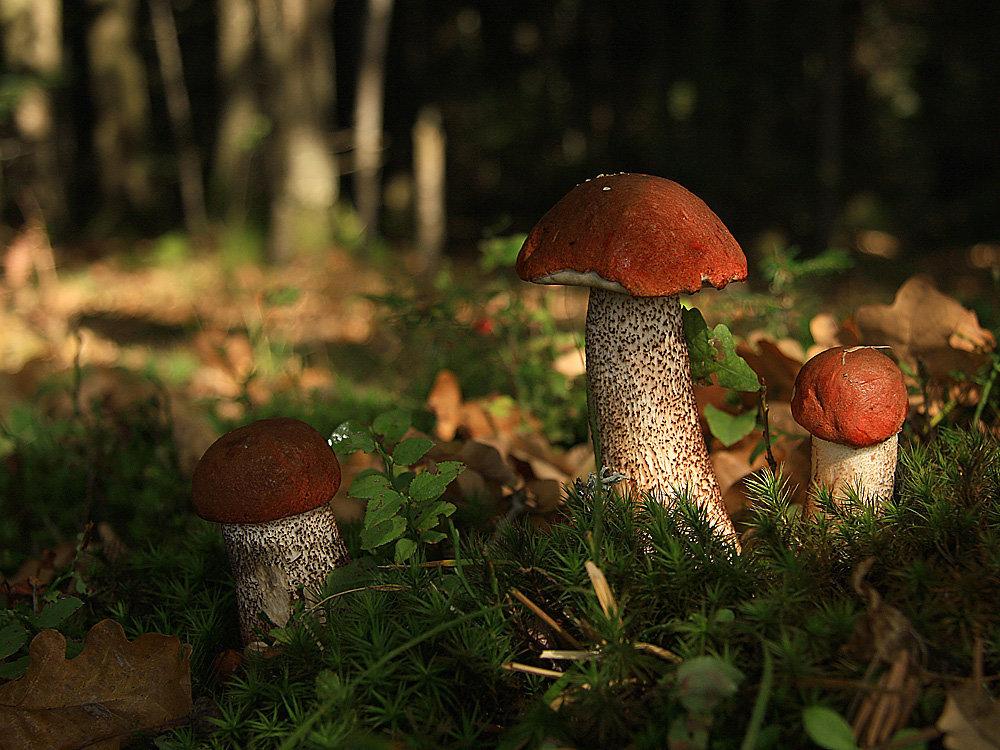 картинки с грибами в лесу стоит втыкать
