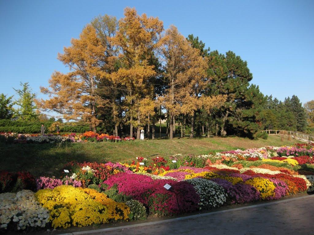 еще спрятаться фоминский ботанический сад фото в киеве сдавать дом