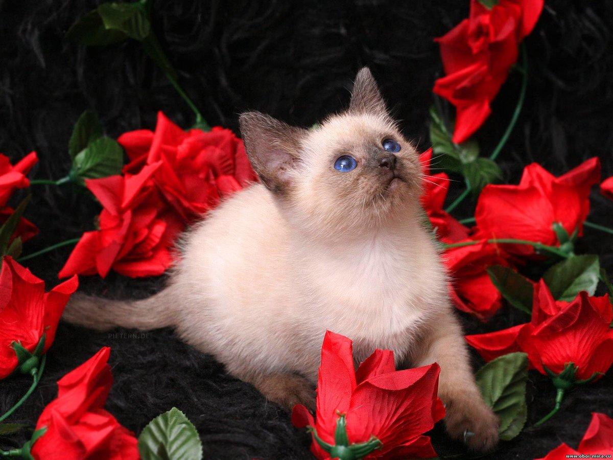 Новым годом, открытки с котами фото