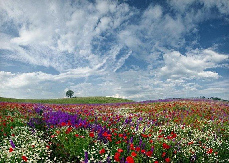 это прекрасное лето фото рай