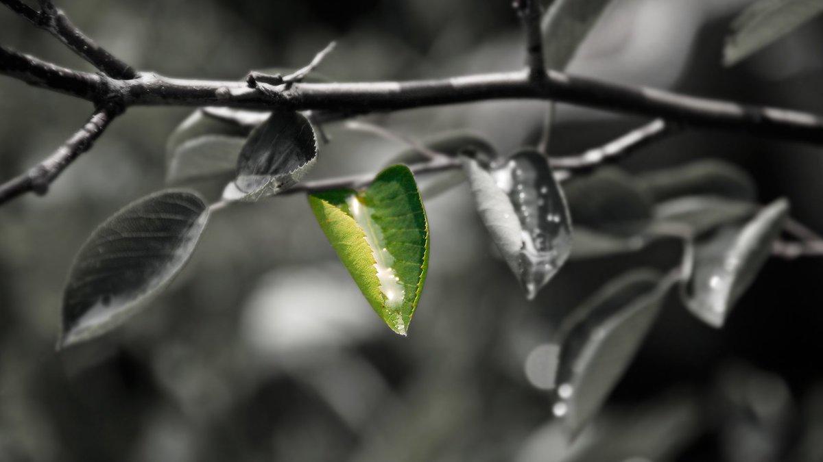 картинки серо-зеленых цветов