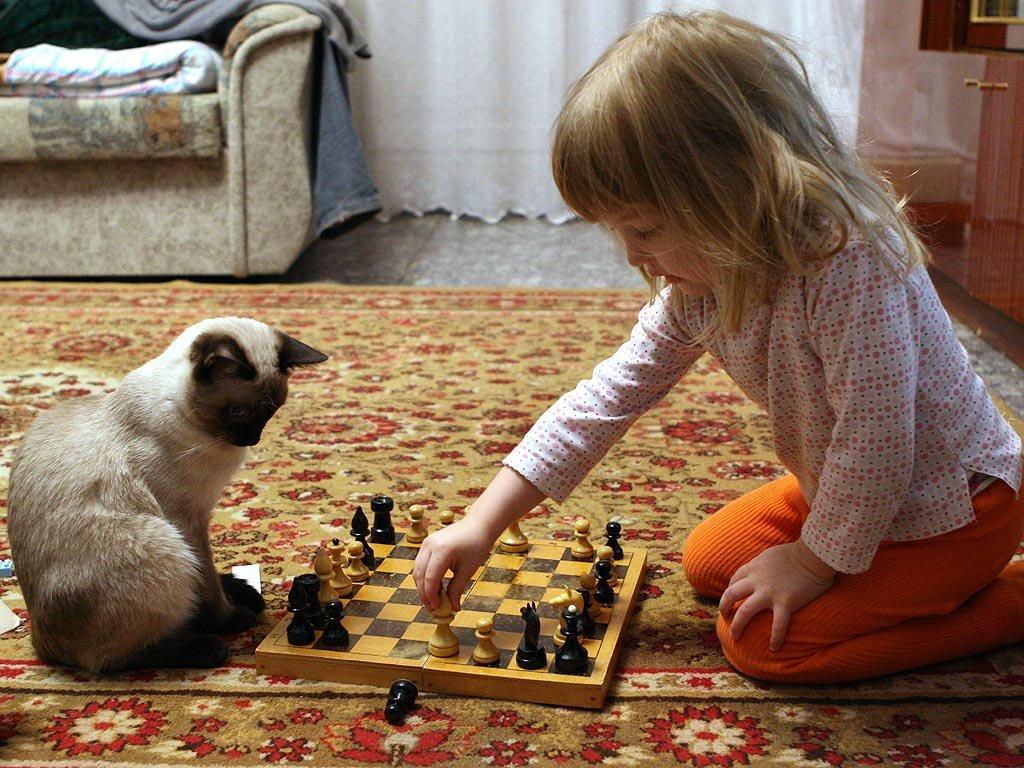 Шахматисты смешные картинки, день рождение