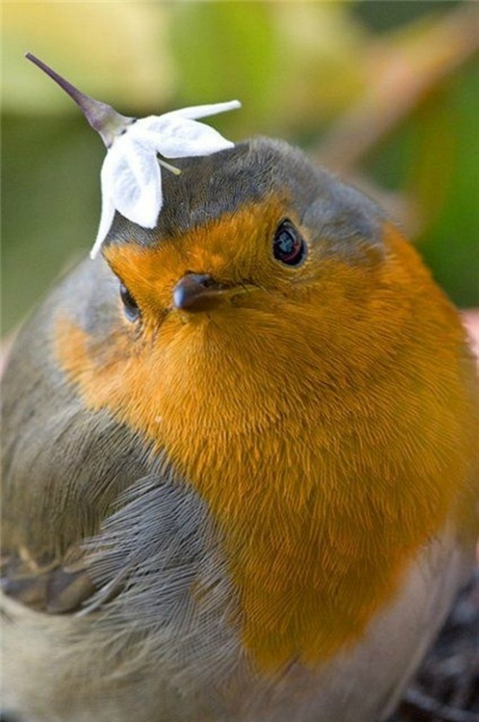 Прикольные картинки птицы, собачки нарисованные картинка