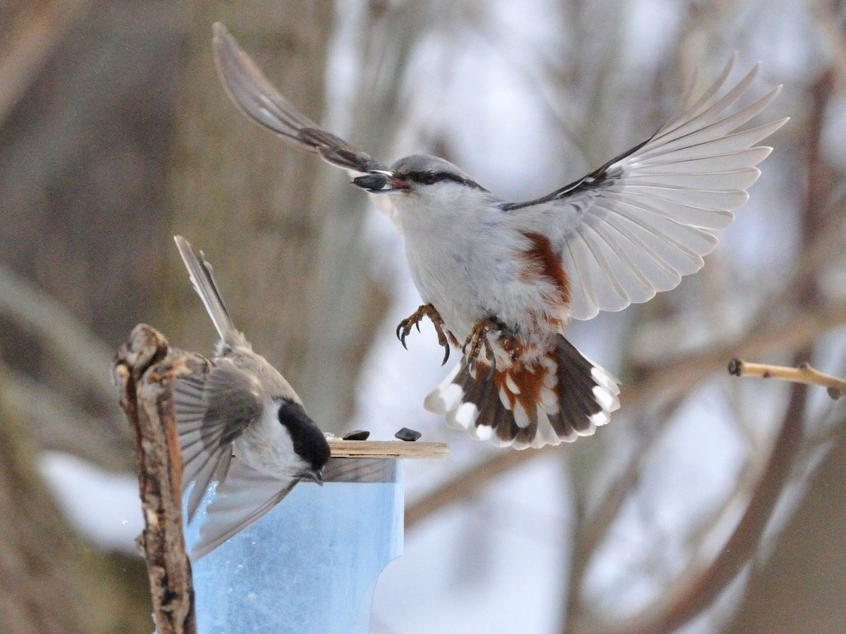 свойства фотоохота на птиц советы методика модных
