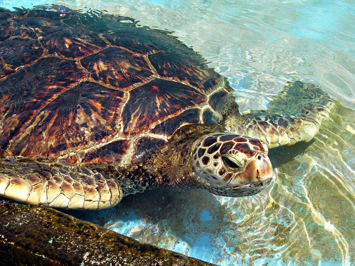 новость фото водоплавающих черепах грузии возбуждено