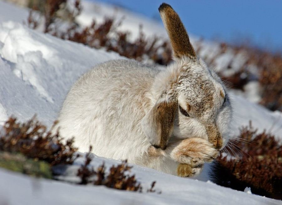 вот про фото заяц зайчата зимой обзор лучших
