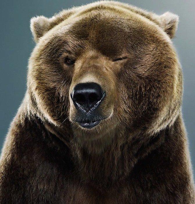 Первым его представителем в настоящее время считают медведя Ursus minimus — относительно небольшое животное, чьи ископаемые останки найдены на территории Франции.