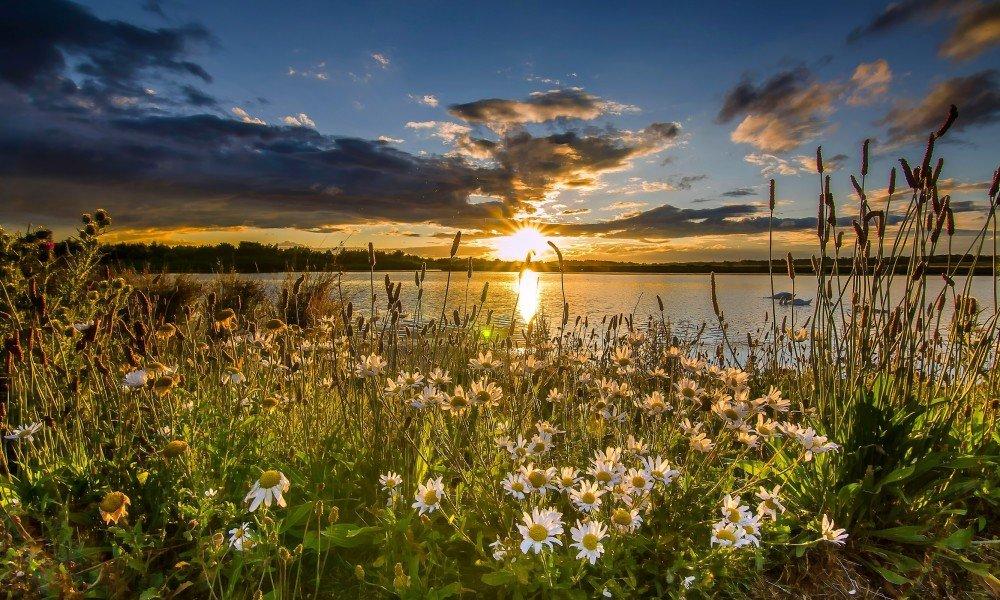 Поздравлениями, доброе утро лето рассвет цветы солнце красивые картинки