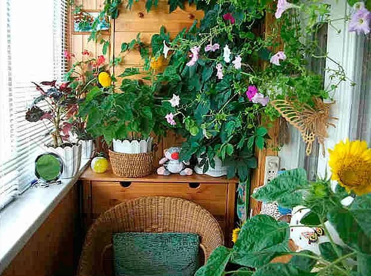 "Зимний сад на балконе или домашний оазис своими руками"" - ка."