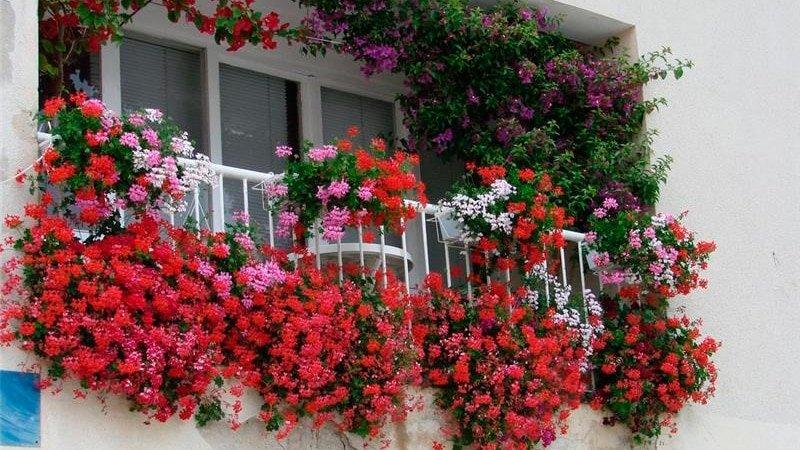 Выращивание цветов на балконе, когда и какие лучше садить цв.