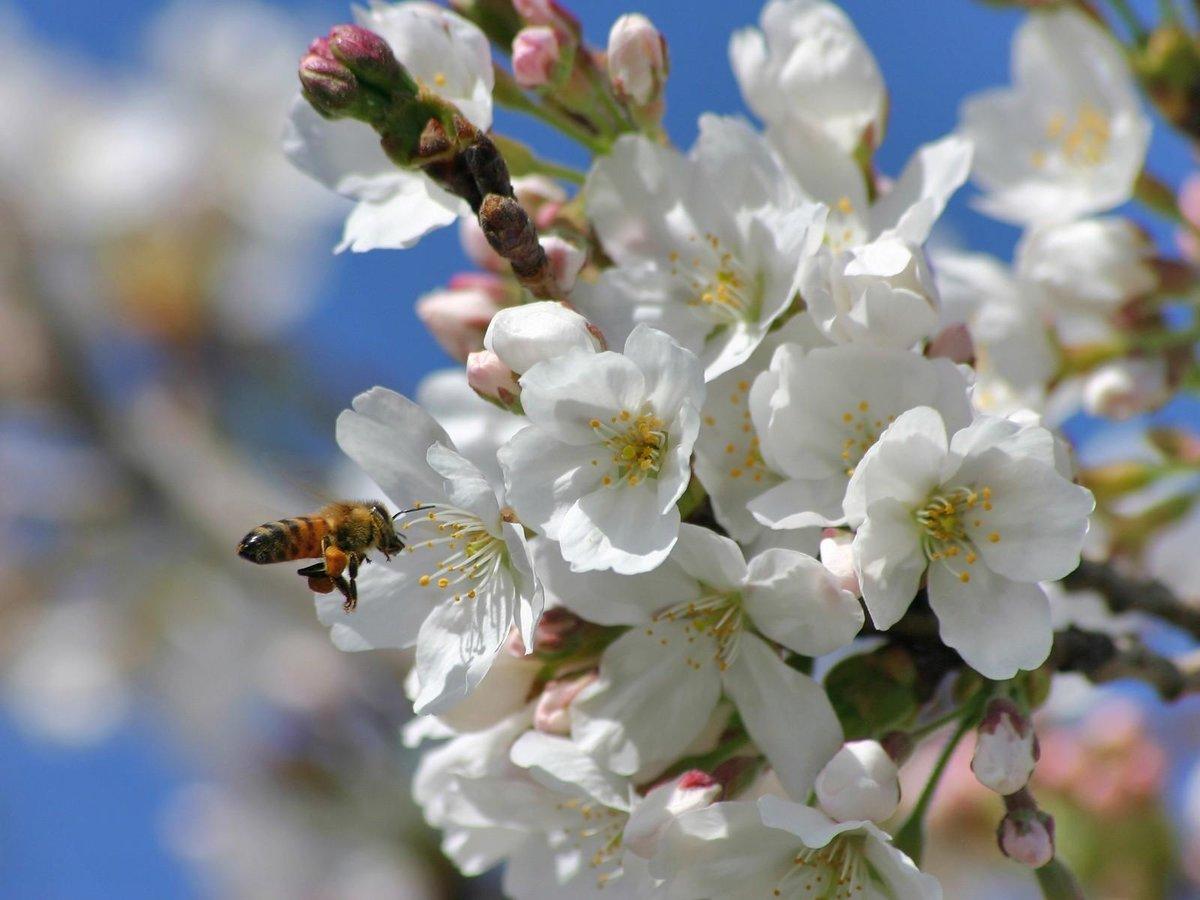Картинки природы весны, приколы про студента