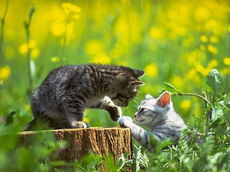 Прикольные картинки кошки и котята, большим разрешением надписями