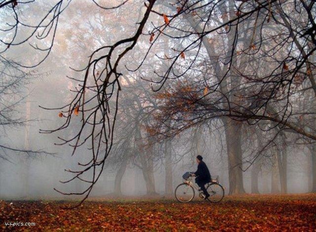 В поэзии осень часто ассоциируется с грустью. Летнее тепло уходит до следующего года, близятся зимние холода. Небо становится серым, а люди погружаются в свои мысли.[8] Русский поэт Фёдор Тютчев в своих стихах описывал подобные явления следующим образом:Обвеян вещею дремотой,Полураздетый лес грустит…Из летних листьев разве сотый,Блестя осенней позолотой,Ещё на ветви шелестит.