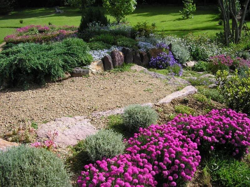 Сказочная армерия, посадка и уход за цветком проходит просто, с этим справиться каждый садовод.