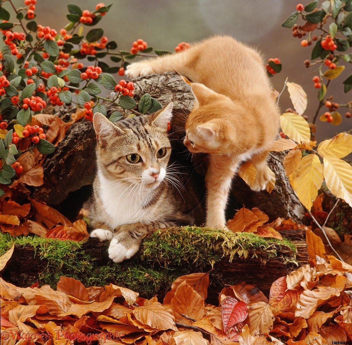 Картинки про осень и животных любимому