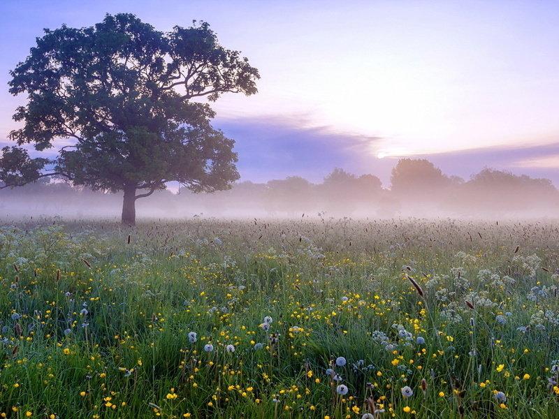 Рисунок, картинки красивые утренние природа