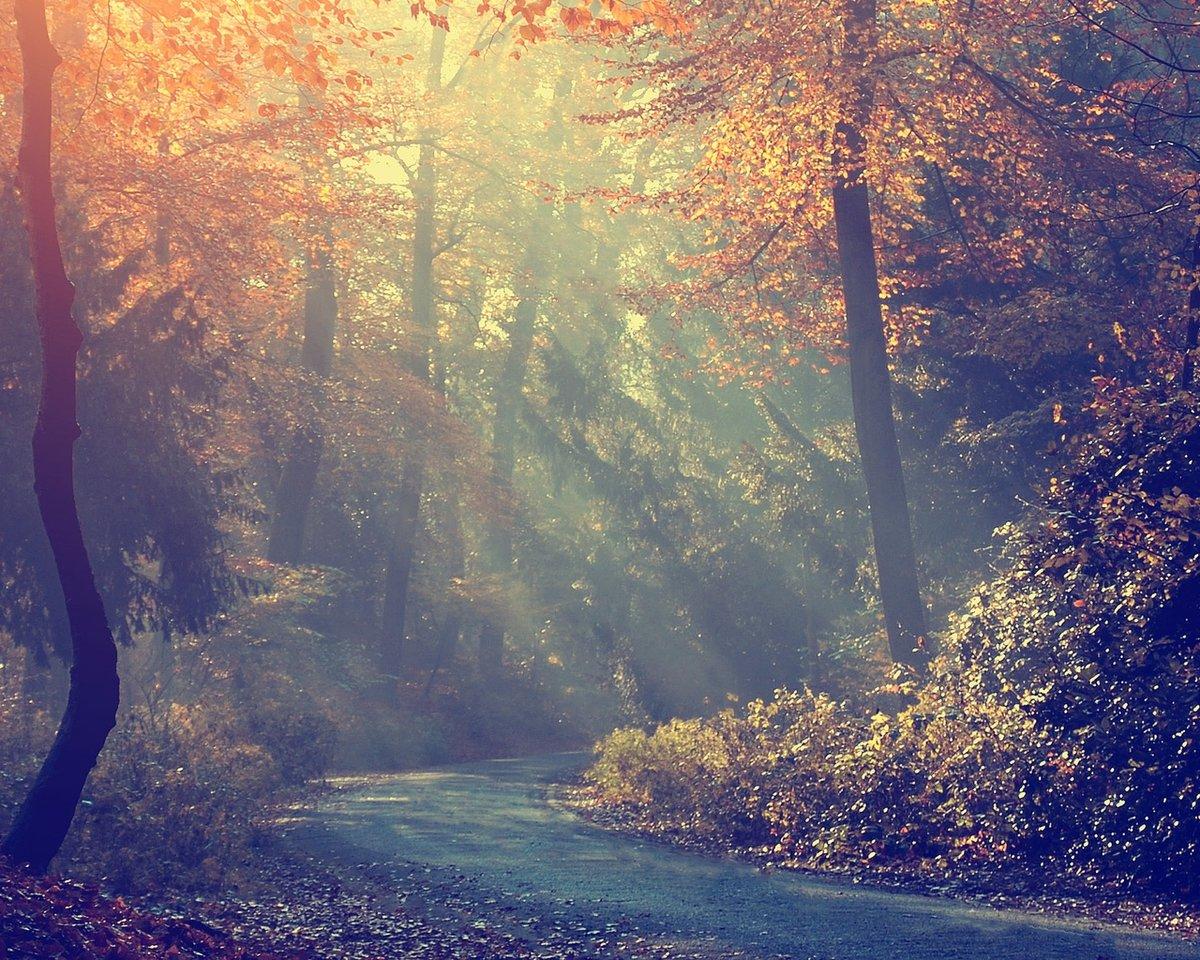Туман на рассвете в осеннем лесу