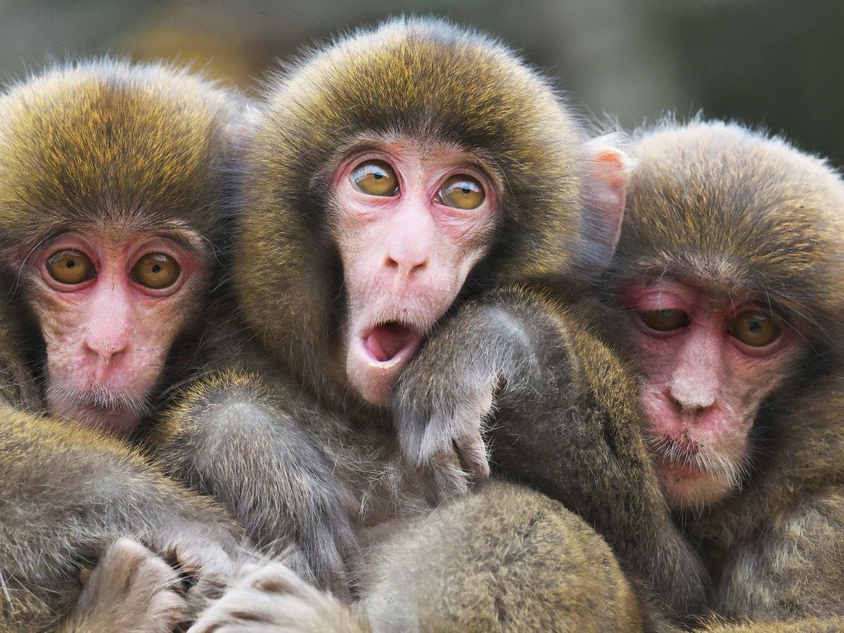 Трое смешная картинка, днем рождения евдокии