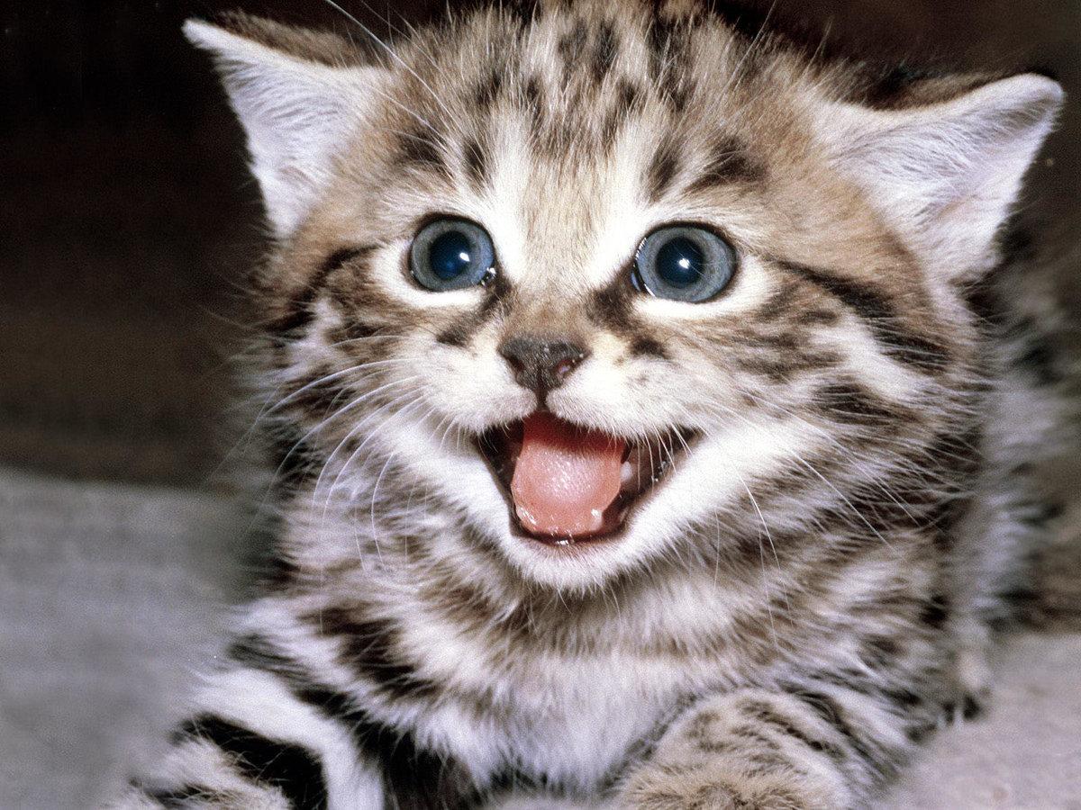 Картинка с котенком смешным