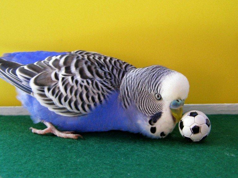 Прикольные картинки волнистые попугаи, днем весны