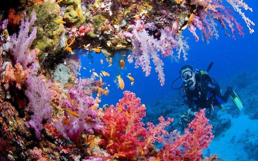 красное море фото под водой древнегреческий оратор