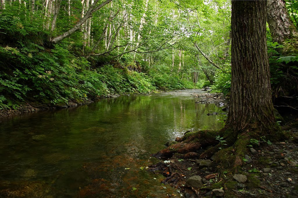 новым фото лесных ручьев фото нужно принципе