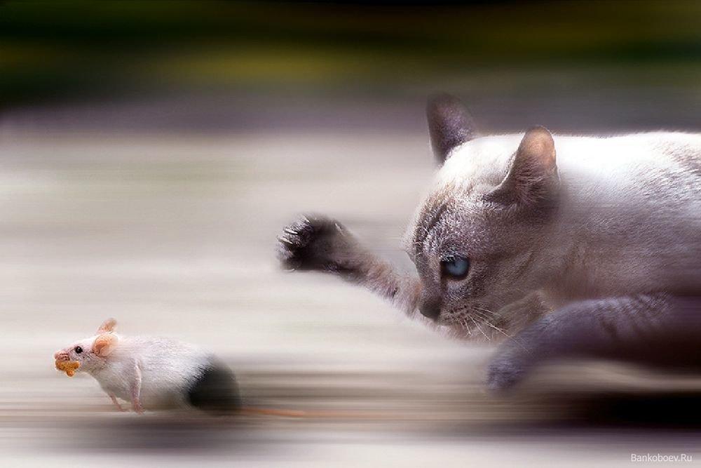 Картинки с кошками и мышками, можно позвонить поздравление