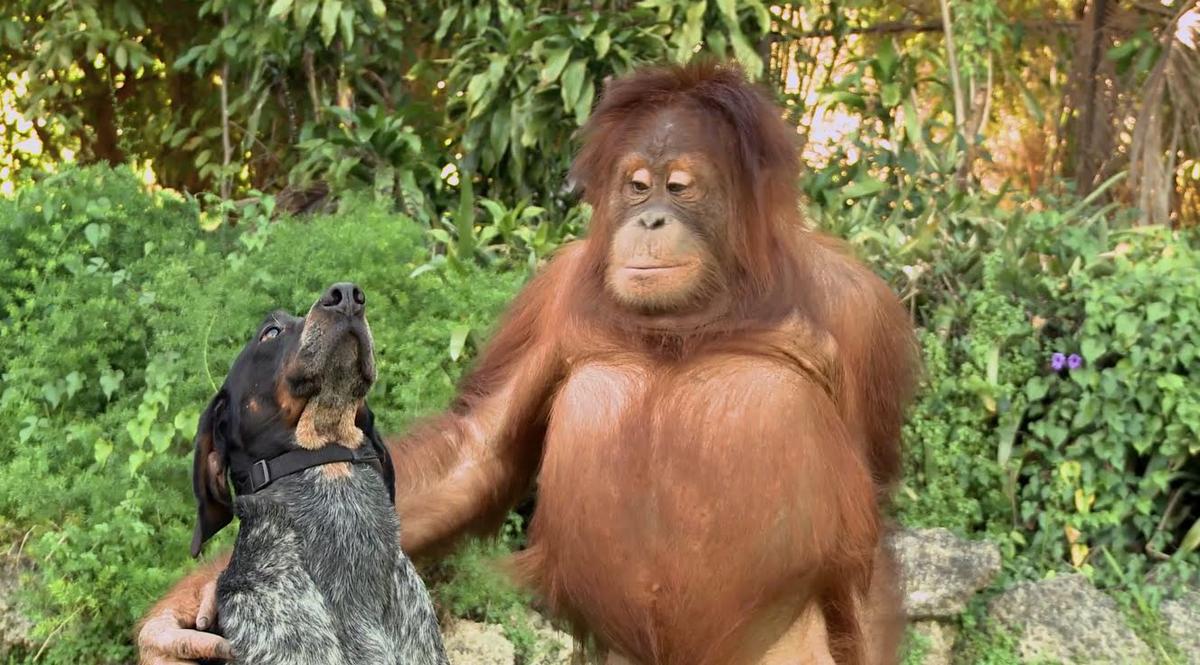 Смотреть смешные картинки онлайн про животных, святой