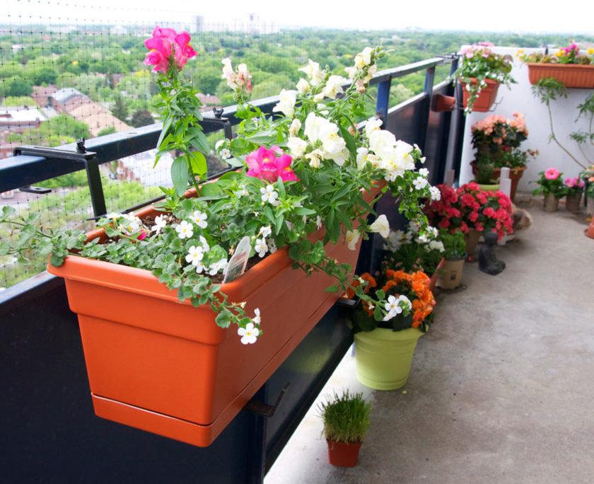 Высаживая любимые цветочки на балконе не забывайте про их ос.