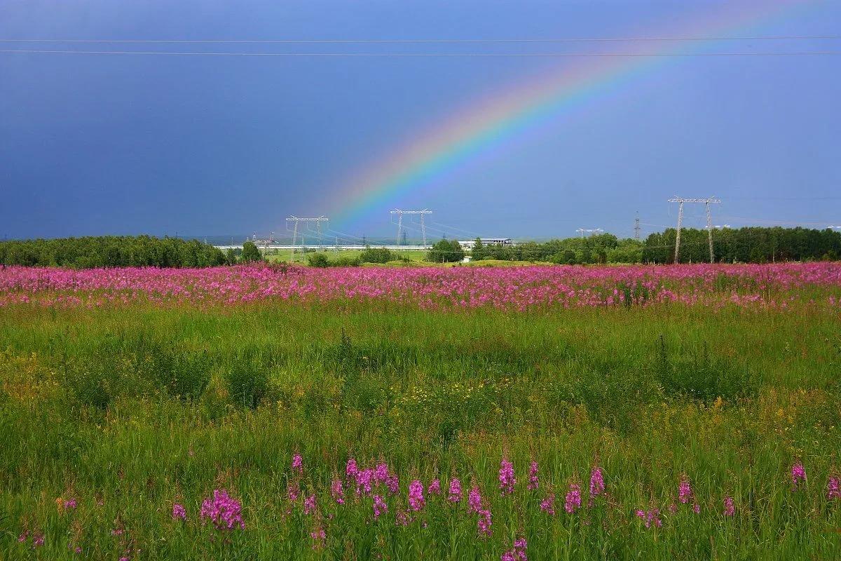 Картинки лето дождь и радуга