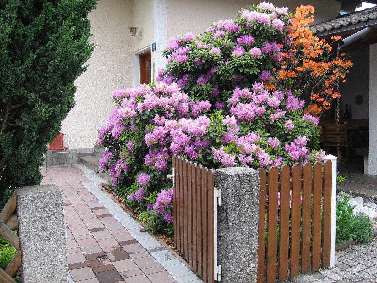 садовая композиция рододендроном фото вещей