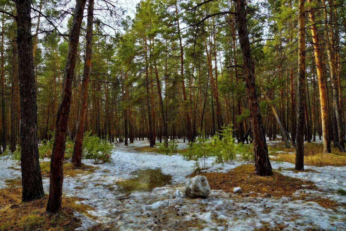 Весна картинки природа в лесу, картинки