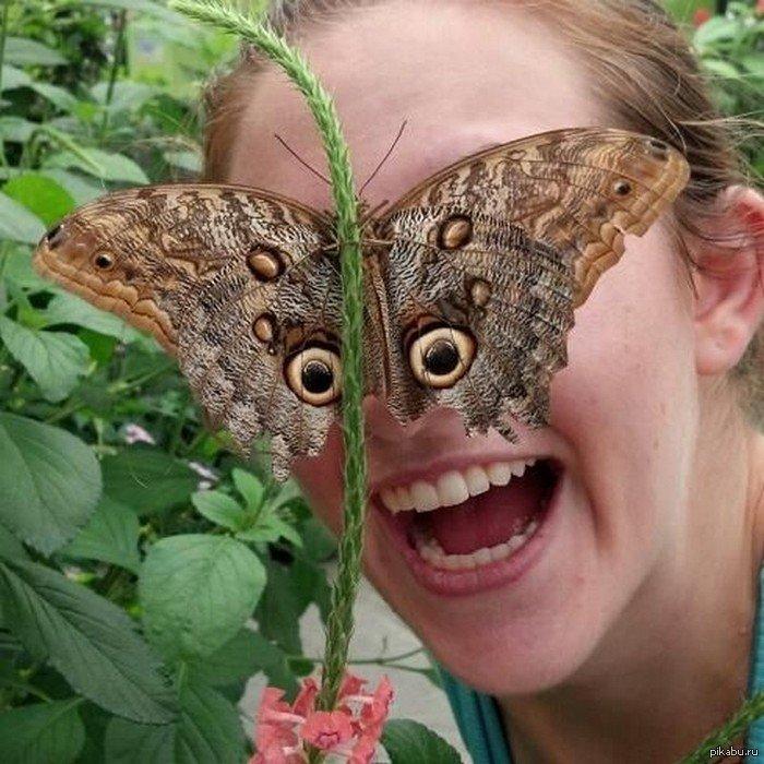 Пасхи поздравления, картинки бабочки смешные