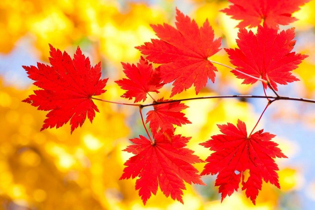 Осеннее картинки очень красивые, бумаги