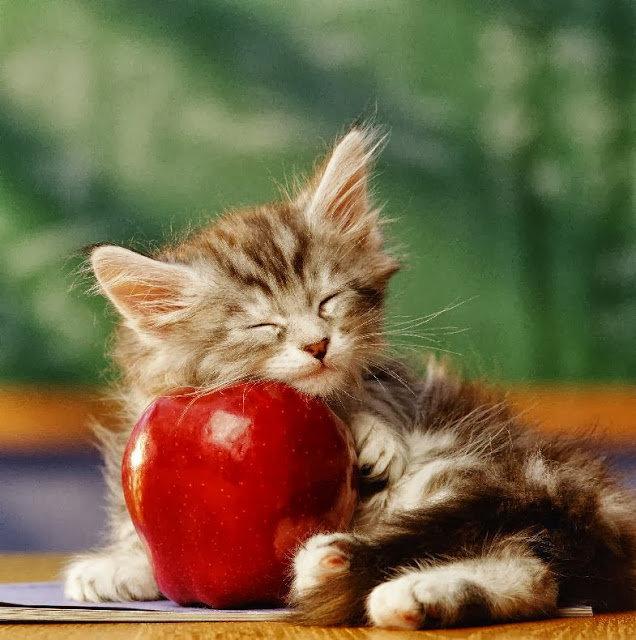 Выздоравливай котята картинки