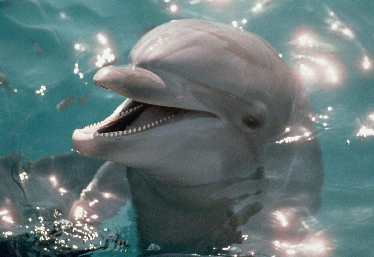 Картинки анимация дельфин, картинки кондитеру