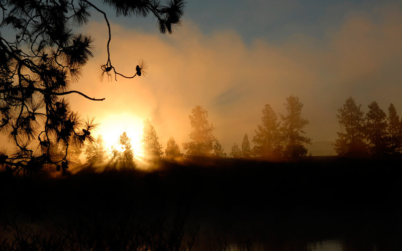 красивый закат в лесуклассно