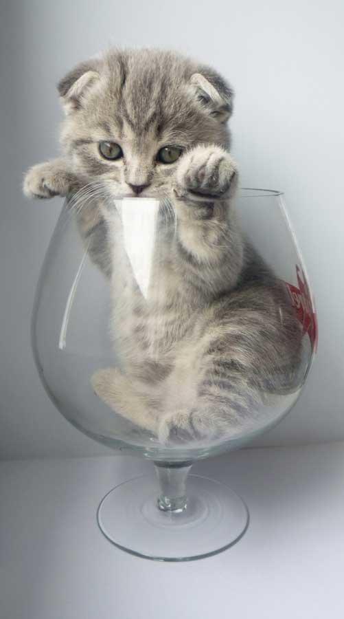 Красивые картинки, вислоухие коты смешные картинки