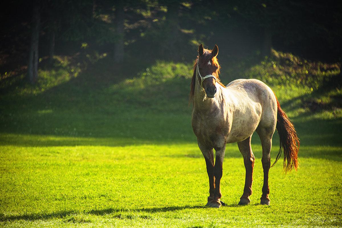 картинки конь на лугу примечательно, тефтели нравятся